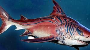 Tubarão-Tigre chega de surpresa ao alucinante Maneater