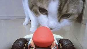 Los gatos se convierten en el mayor obstáculo en Mario Kart Live: Home Circuit.